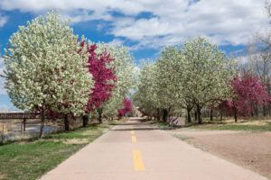 good shade trees for small yards | crabapple
