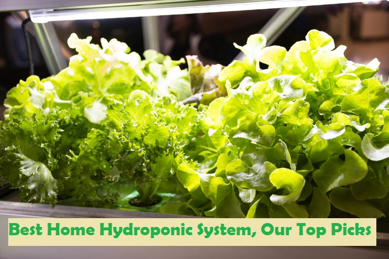 5 Best Home Hydroponic System, Our Top Picks