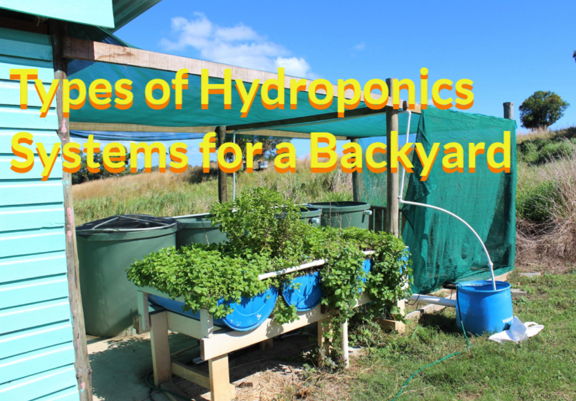 Types of Hydroponics Systems for a Backyard