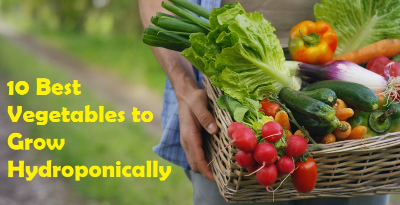 10 Best Vegetables to Grow Hydroponically
